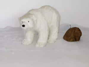 Large male polar bear