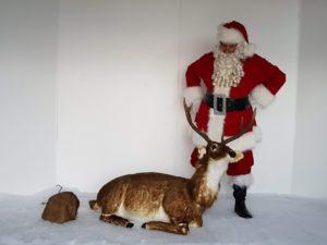 Animated sitting dark stag reindeer